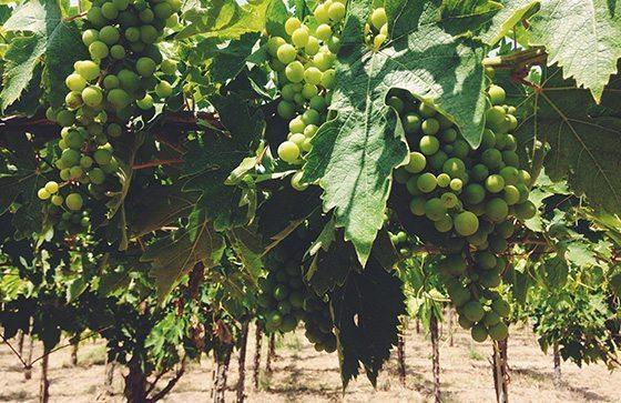 Галисия винодельческая