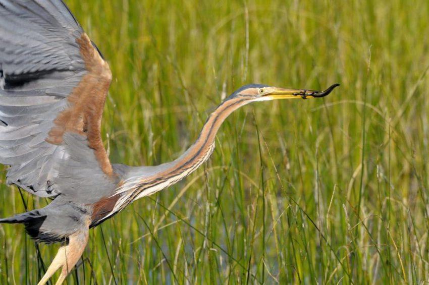 Doñana, European Ecology Reserve